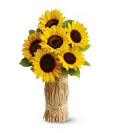 Arrangement og 6 Sunflowers